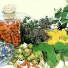 Природные помощники — лекарственные травы