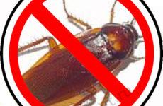 Как избавиться от тараканов в доме? Ответим!